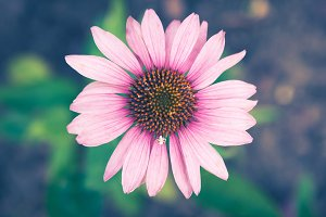 Pink Flower with White Spider