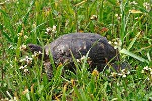 Turtle Blooming Flowers