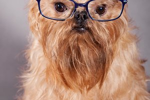 Dog in blue glasses