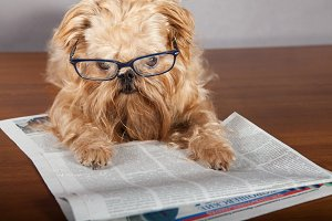 Dog in glasses reading the newspaper