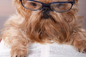 Serious dog in the glasses