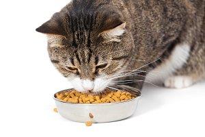 at eats a dry feed
