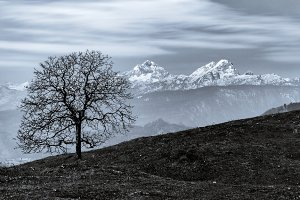 Tree and the mountain