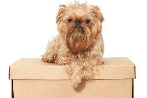 Dog on a cardboard box