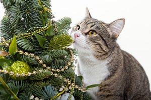 Сat and green Christmas tree
