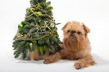 Dog and green Christmas tree