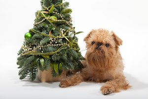 Dog and green Christmas tree