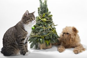 Cat, dog  and green Christmas tree