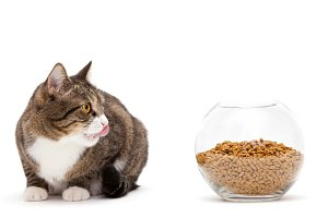 Cat and a heap of dry food