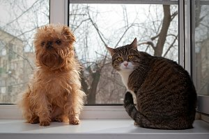 Cat and the dog