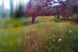 Distorted Spring Landscape