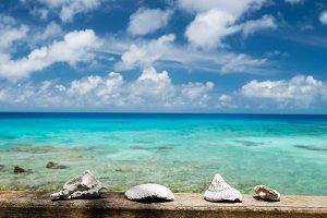 Lagoon and seashells