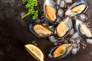 Fresh opened mussels on ice