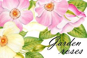Garden roses clipart