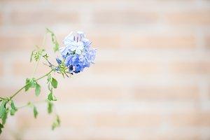 Hello Spring - Purple Flower