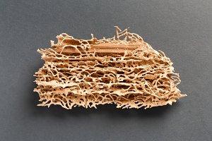 Wood plank eaten by termite