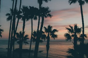 Tall palm trees and sunset