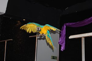 show with parrot