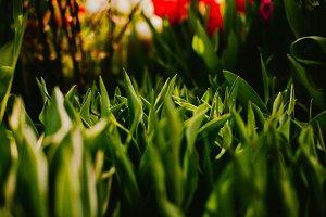 Green grass close-up. Background