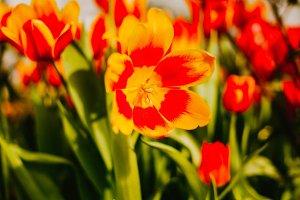 Orange flower on background colors