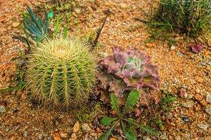 Succulents and cactuses in Dalat Flower Park, Vietnam
