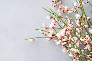 Spring easter broom floral minimal pastel color background