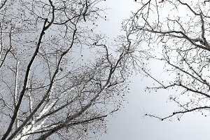 Trees Without Leaves