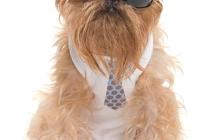 Dog with sunglasses and a tie