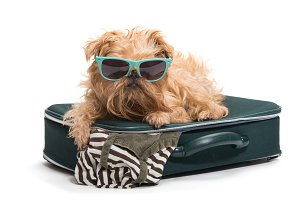 Dog with glasses and a suitcase