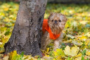 Dog in a park in autumn.