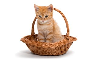 Orange kitten sitting in a basket