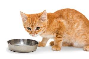 Orange kitten drinking milk