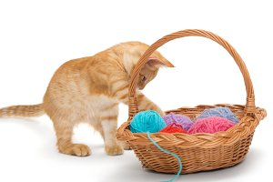 Kitten and basket