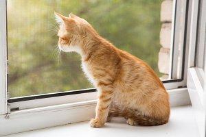 Small, orange kitten