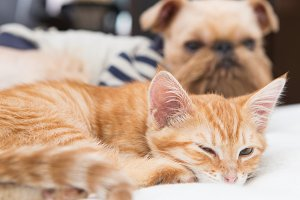 Kitten and dog sleeping