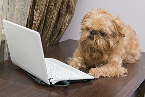 Dog and the laptop