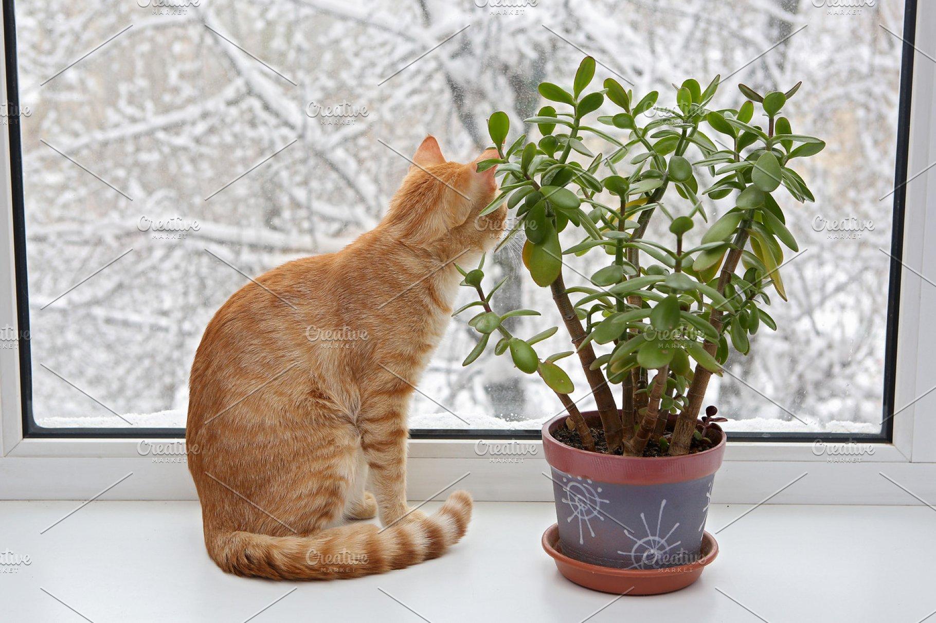 Ginger kitten on a window in winter