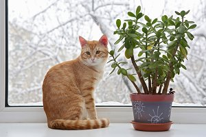 Ginger kitten on a window in winter