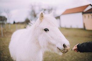 White pony.
