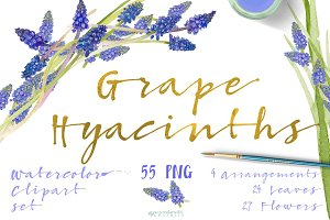 Grape Hyacinths_Blue Spring