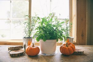 Pumpkins Vignette in Window