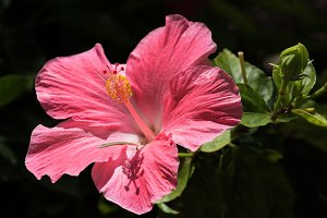 close up view of nice pink flower