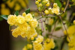 Beautiful yellows flowers