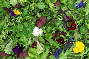 Food background Salad leaves