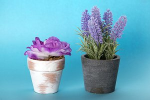 Two flower pots as decoration on blue background.