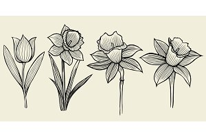 sketch of flowers.