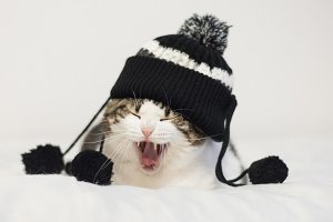 Funny cat yawning ready to sleep