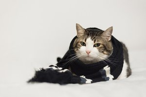 Funny cat wearing a warm scarf