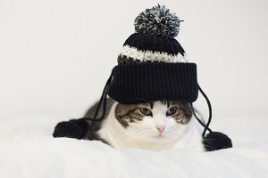 Funny cat wearing a hat with pompon