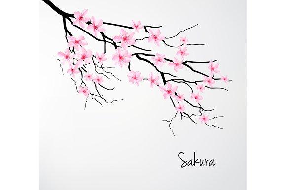 Blossom Branch Of Sakura